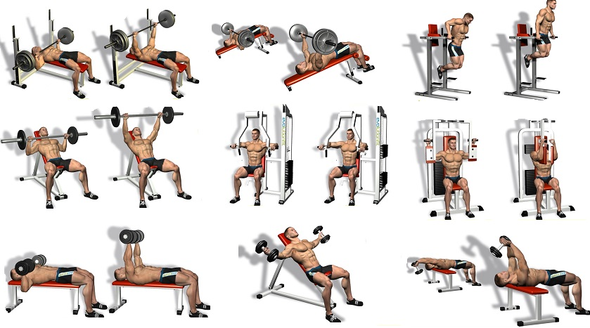 Best Chest Exercises.jpg